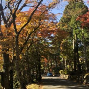 箱根の紅葉を巡ってみたが、薔薇に菊と盛り沢山