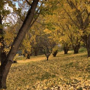 秦野市の紅葉を一気にまわってみました