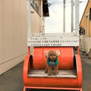 🚍車旅-佐賀県で牡蠣→長崎県(九十九島)