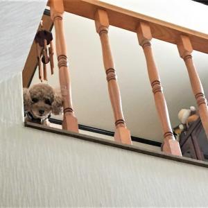 階段で待つ小太郎くん