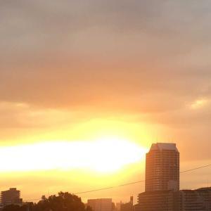 きれいな夕日と花に癒されます