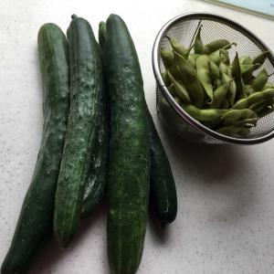 徳島からの野菜と今日の小太郎くん😊