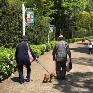 鶴見緑地を散歩🐾