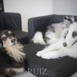 イケアのペット用品「LURVIG/ルールヴィグ」犬用ソファベッドの組み立て&サイズ感