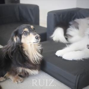 イケアのペット用品「LURVIG/ルールヴィグ」犬用ソファベッドを寝室へ