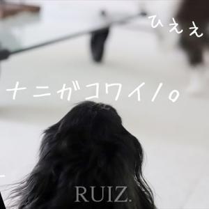 お買い物リスト・インテリア編。クールなニトリにホテルなトイレ。