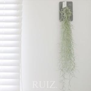 グリーンに運気をあげる力はあるのか。空気中の水分で育つエアプランツを壁に。