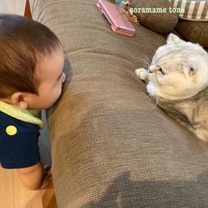 猫ちゃんをお迎えしました。真夜中に赤ちゃんを心配する猫の話。