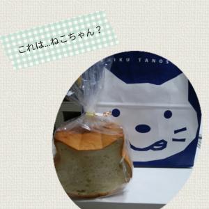 【閑話休題】【ネコ】のベビーサインが出そうなかわいいパンをゲット♪