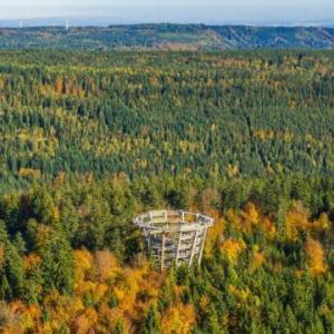 中世では森が人々に大きな影響を与えていた?