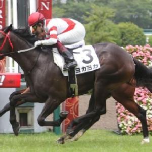 九州産馬の頂点へ ひまわり賞