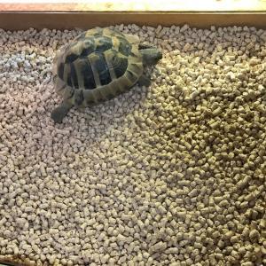 【飼育環境改善】リクガメの床材について、改めて考える③~ヒノキの床材~