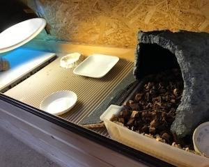 【飼育環境改善】リクガメの床材について、改めて考える