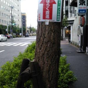 古き都を偲ぶ 「そうだ 京都、歩こう。」