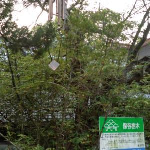 蓮鑑賞&高砂寺社巡り22・・高砂神社
