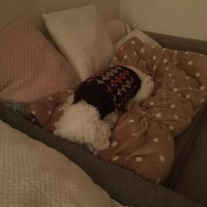 鼻を温める犬