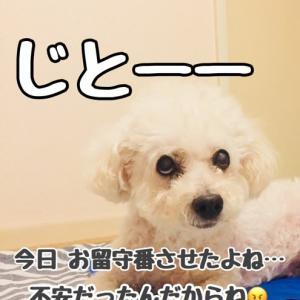 ステイホームを訴える犬 「抱きしめて!もっと強く!」