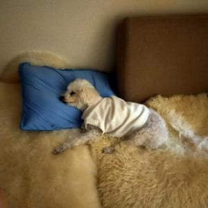 睡眠中の愛犬に言いたいこと