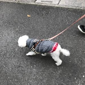 Amazonで買った犬服 どうですかね〜〜