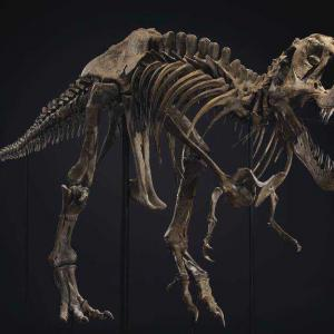 T-レックスがオークションにかけられる!世界最大の恐竜のスケルトンはいったいいくらになるか?