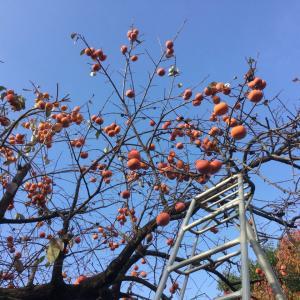 Vol.3635 柿の季節