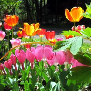 Vol.3765 春の庭