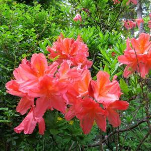 Vol.3775 初夏の庭
