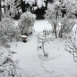 Vol.3951 上雪