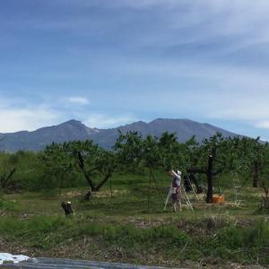 Vol.4040 林檎園と浅間山