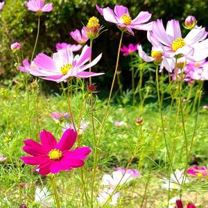 大阪自慢!お花好きの人は長居植物園へ