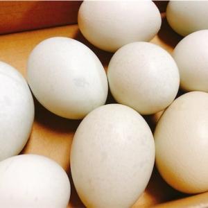 青い卵もらいました【ゆる糖質制限メニュー】