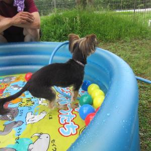 ビニールプールで遊ぼう♪