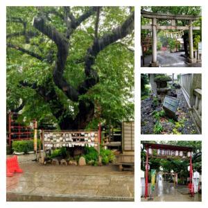 6月16日 アマビエ御朱印 居木神社
