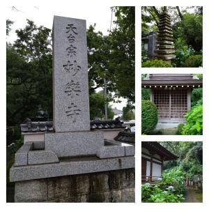 6月17日 紫陽花を見に行く 妙楽寺
