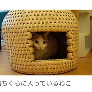 新曲「猫ちぐら」はミディアムテンポの良曲!
