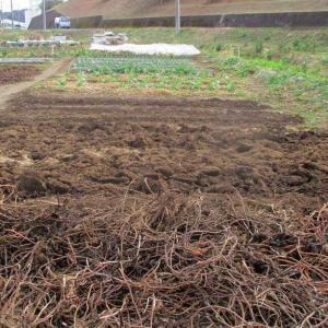 ハトムギ予定畝を寒起こしをしました。
