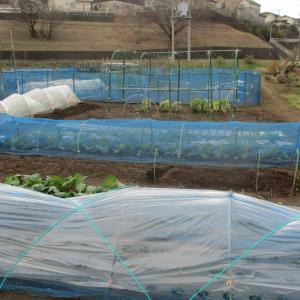 春ほうれん草とレタスの種を蒔きました。