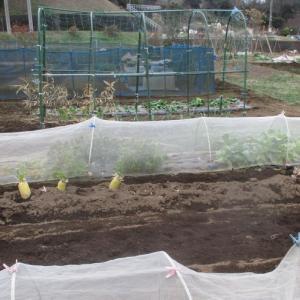水菜と春菊は死にました。