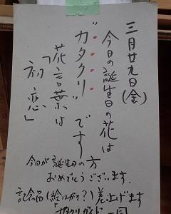 カタクリ速報4