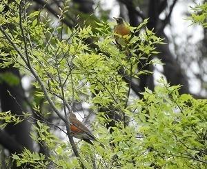今度は春から夏へバトンタッチ。光が丘公園探鳥会(と、草はらの日)!