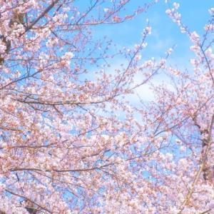 【宝塚】月組『桜嵐記』で1年4か月ぶりに新人公演が上演されました!