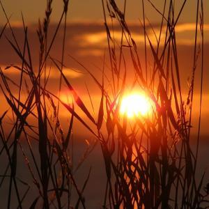 夏至エネルギーで3チャクラが強まった体験!太陽は自我の方向性を照らす光