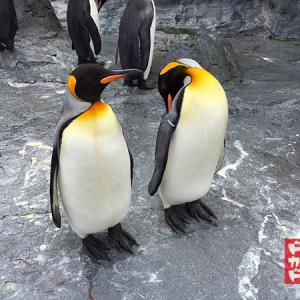 ペンギンさんに学ぶ 雪道の歩行と走行