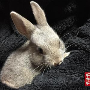 すくすく成長 ミニウサギさん