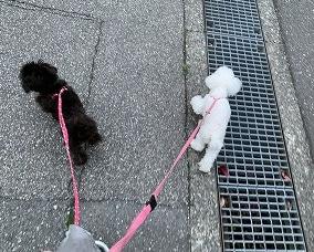 ママさんと散歩