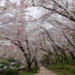 いつもと同じ春、いつもとは違う春……