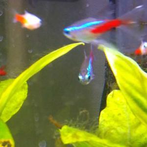 ウチの魚たち