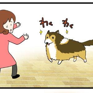 犬が逃げた場合とその解決法(※参考になりません)