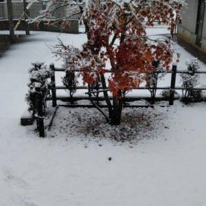 Waltzでhappy〜新潟と東京の冬は違う⛄❄️〜