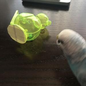 小鳥の水笛2